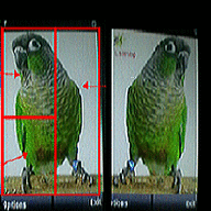 Symbian Crazy Parrot freeware