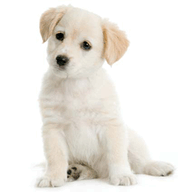 Symbian Puppy Talk freeware