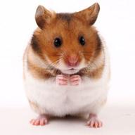 Symbian Talking Hamster freeware